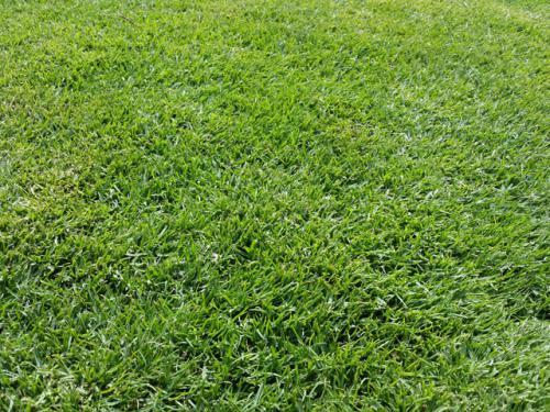 Turf-Grass